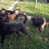 kutya-menhely-gazdit-keres-hajdú-bihar-hajdúszoboszló-kutya-orokbefogadas-22