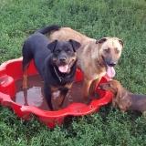 kutya-menhely-gazdit-keres-hajdú-bihar-hajdúszoboszló-kutya-orokbefogadas-23