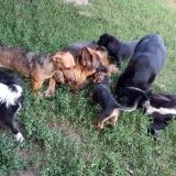 kutya-menhely-gazdit-keres-hajdú-bihar-hajdúszoboszló-kutya-orokbefogadas-24