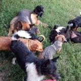 kutya-menhely-gazdit-keres-hajdú-bihar-hajdúszoboszló-kutya-orokbefogadas-25