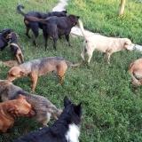 kutya-menhely-gazdit-keres-hajdú-bihar-hajdúszoboszló-kutya-orokbefogadas-26
