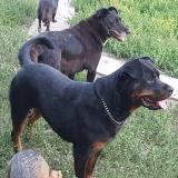 kutya-menhely-gazdit-keres-hajdú-bihar-hajdúszoboszló-kutya-orokbefogadas-27
