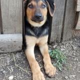 kutya-menhely-gazdit-keres-hajdú-bihar-hajdúszoboszló-kutya-orokbefogadas-3
