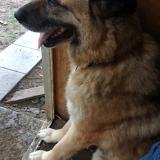 kutya-menhely-gazdit-keres-hajdú-bihar-hajdúszoboszló-kutya-orokbefogadas-7