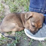 kutya-menhely-hajdú-bihar-hajdúszoboszló-kutyaorokbefogadas-2019.május-1