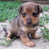 kutya-menhely-hajdú-bihar-hajdúszoboszló-kutyaorokbefogadas-2019.május-10