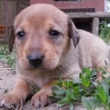 kutya-menhely-hajdú-bihar-hajdúszoboszló-kutyaorokbefogadas-2019.május-11