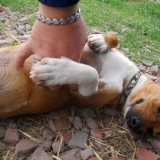 kutya-menhely-hajdú-bihar-hajdúszoboszló-kutyaorokbefogadas-2019.május-16