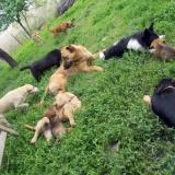 kutya-menhely-hajdú-bihar-hajdúszoboszló-kutyaorokbefogadas-2019.május-18