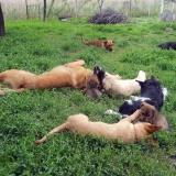 kutya-menhely-hajdú-bihar-hajdúszoboszló-kutyaorokbefogadas-2019.május-19
