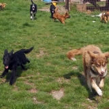 kutya-menhely-hajdú-bihar-hajdúszoboszló-kutyaorokbefogadas-2019.május-21