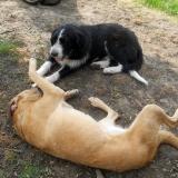 kutya-menhely-hajdú-bihar-hajdúszoboszló-kutyaorokbefogadas-2019.május-27