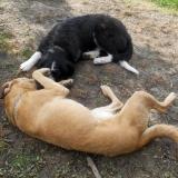 kutya-menhely-hajdú-bihar-hajdúszoboszló-kutyaorokbefogadas-2019.május-28
