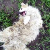 kutya-menhely-hajdú-bihar-hajdúszoboszló-kutyaorokbefogadas-2019.május-30