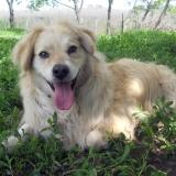 kutya-menhely-hajdú-bihar-hajdúszoboszló-kutyaorokbefogadas-2019.május-31