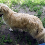 kutya-menhely-hajdú-bihar-hajdúszoboszló-kutyaorokbefogadas-2019.május-32