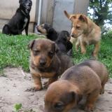 kutya-menhely-hajdú-bihar-hajdúszoboszló-kutyaorokbefogadas-2019.május-8