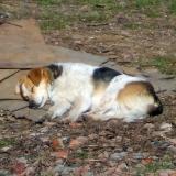 kutya-menhely-hajdú-bihar-hajdúszoboszló-kutyaorokbefogadas-2019.március-11