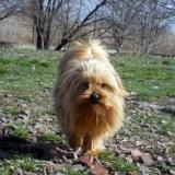 kutya-menhely-hajdú-bihar-hajdúszoboszló-kutyaorokbefogadas-2019.március-12