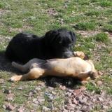 kutya-menhely-hajdú-bihar-hajdúszoboszló-kutyaorokbefogadas-2019.március-16