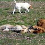 kutya-menhely-hajdú-bihar-hajdúszoboszló-kutyaorokbefogadas-2019.március-17