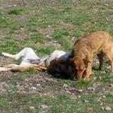 kutya-menhely-hajdú-bihar-hajdúszoboszló-kutyaorokbefogadas-2019.március-18