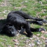 kutya-menhely-hajdú-bihar-hajdúszoboszló-kutyaorokbefogadas-2019.március-19
