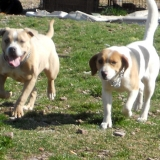 kutya-menhely-hajdú-bihar-hajdúszoboszló-kutyaorokbefogadas-2019.március-20
