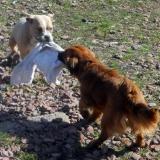 kutya-menhely-hajdú-bihar-hajdúszoboszló-kutyaorokbefogadas-2019.március-21