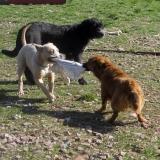 kutya-menhely-hajdú-bihar-hajdúszoboszló-kutyaorokbefogadas-2019.március-23