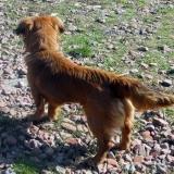 kutya-menhely-hajdú-bihar-hajdúszoboszló-kutyaorokbefogadas-2019.március-24