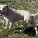 kutya-menhely-hajdú-bihar-hajdúszoboszló-kutyaorokbefogadas-2019.március-25