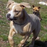 kutya-menhely-hajdú-bihar-hajdúszoboszló-kutyaorokbefogadas-2019.március-27