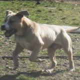 kutya-menhely-hajdú-bihar-hajdúszoboszló-kutyaorokbefogadas-2019.március-28