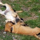 kutya-menhely-hajdú-bihar-hajdúszoboszló-kutyaorokbefogadas-2019.március-30