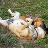 kutya-menhely-hajdú-bihar-hajdúszoboszló-kutyaorokbefogadas-2019.március-31
