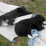 kutya-menhely-hajdú-bihar-hajdúszoboszló-kutyaorokbefogadas-2019.március-6