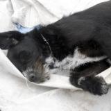 kutya-menhely-hajdú-bihar-hajdúszoboszló-kutyaorokbefogadas-2019.március-7