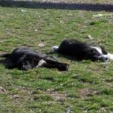 kutya-menhely-hajdú-bihar-hajdúszoboszló-kutyaorokbefogadas-2019.március-8