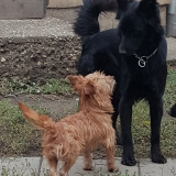 kutya-menhely-gazdit-keres-hajdú-bihar-hajdúszoboszló-kutya-orokbefogadas-2019-oktober-19