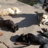kutya-menhely-gazdit-keres-hajdú-bihar-hajdúszoboszló-kutya-orokbefogadas-2019-oktober-24