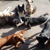 kutya-menhely-gazdit-keres-hajdú-bihar-hajdúszoboszló-kutya-orokbefogadas-2019-oktober-26