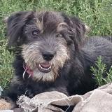 kutya-menhely-gazdit-keres-hajdú-bihar-hajdúszoboszló-kutya-orokbefogadas-2019-szeptember-11