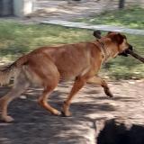 kutya-menhely-gazdit-keres-hajdú-bihar-hajdúszoboszló-kutya-orokbefogadas-2019-szeptember-13