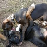 kutya-menhely-gazdit-keres-hajdú-bihar-hajdúszoboszló-kutya-orokbefogadas-2019-szeptember-19