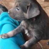 kutya-menhely-gazdit-keres-hajdú-bihar-hajdúszoboszló-kutya-orokbefogadas-2019-szeptember-21