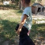 kutya-menhely-gazdit-keres-hajdú-bihar-hajdúszoboszló-kutya-orokbefogadas-2019-szeptember-4