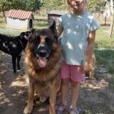kutya-menhely-gazdit-keres-hajdú-bihar-hajdúszoboszló-kutya-orokbefogadas-2019-szeptember-6
