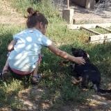 kutya-menhely-gazdit-keres-hajdú-bihar-hajdúszoboszló-kutya-orokbefogadas-2019-szeptember-7
