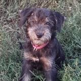 kutya-menhely-gazdit-keres-hajdú-bihar-hajdúszoboszló-kutya-orokbefogadas-2019-szeptember-9